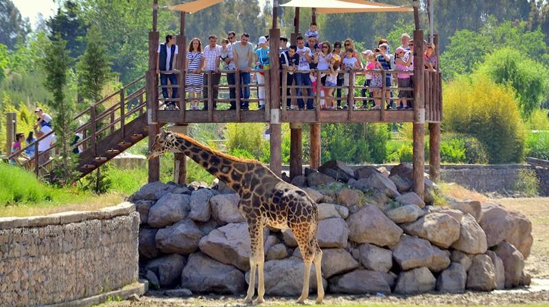Sasalı Hayvanat Bahçesinde neler var