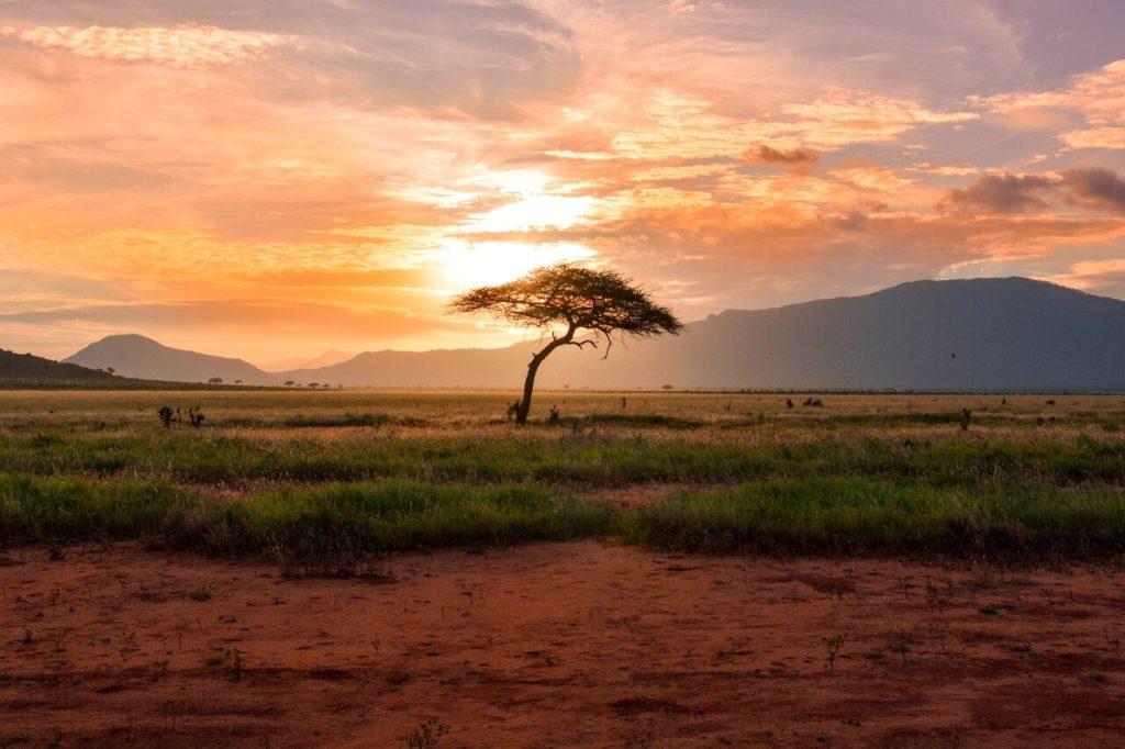 vizesiz gidilecek ülkeler, afrika ağaç
